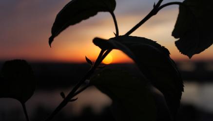 Photoflower.png