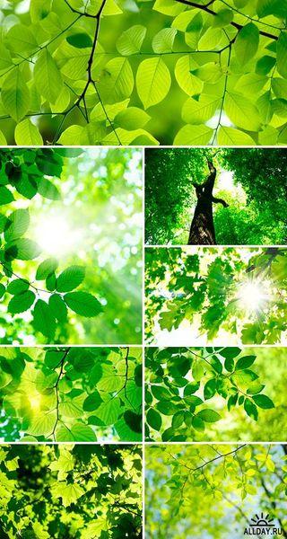 Файл:Green Leaves.jpg